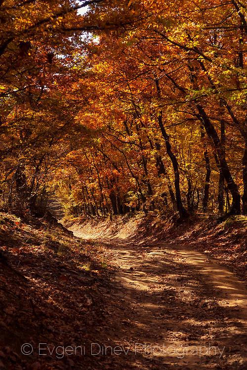 Път през есенна дъбова гора в Стара Планина