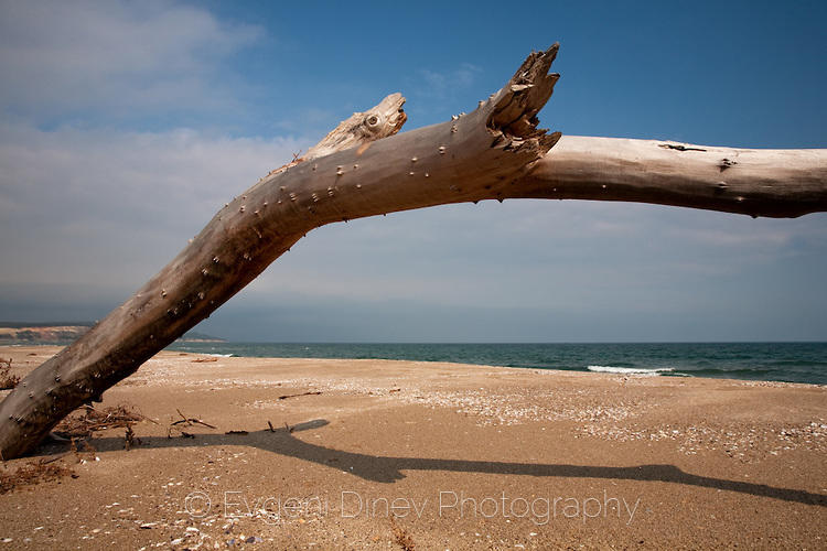 Морско дърво