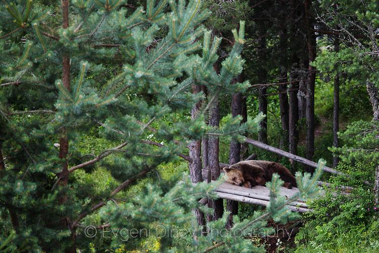 Резерват за танцуващи мечки край Белица