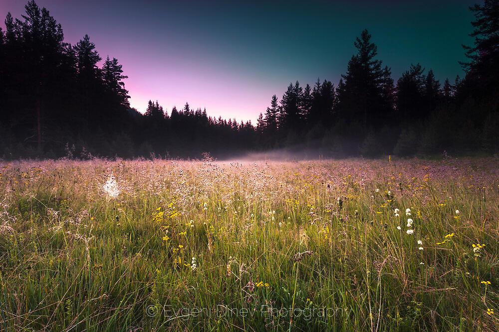 Цветна поляна