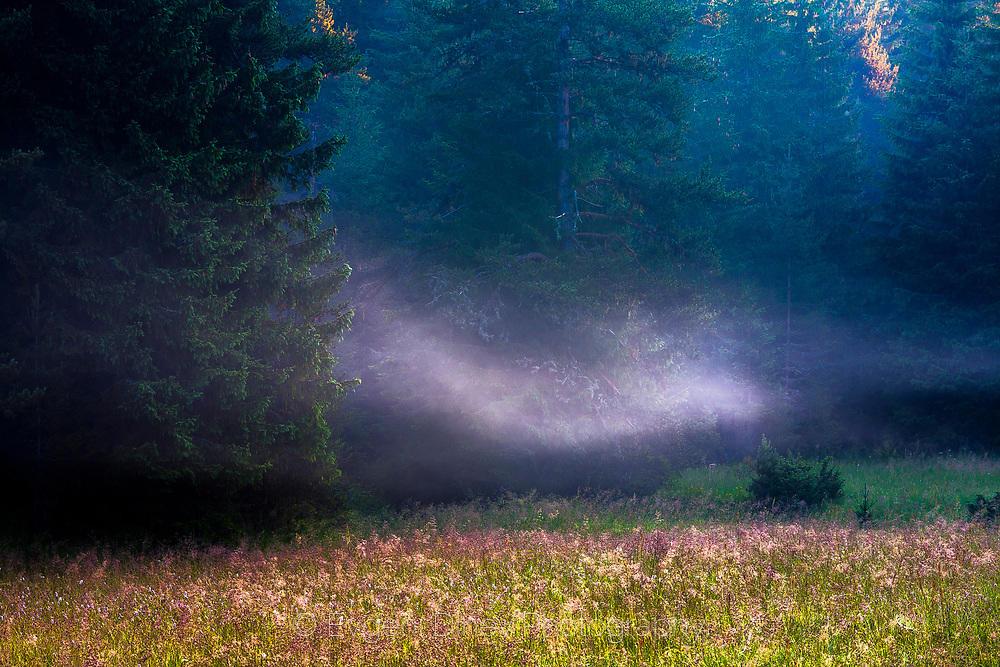 Свежа лятна поляна