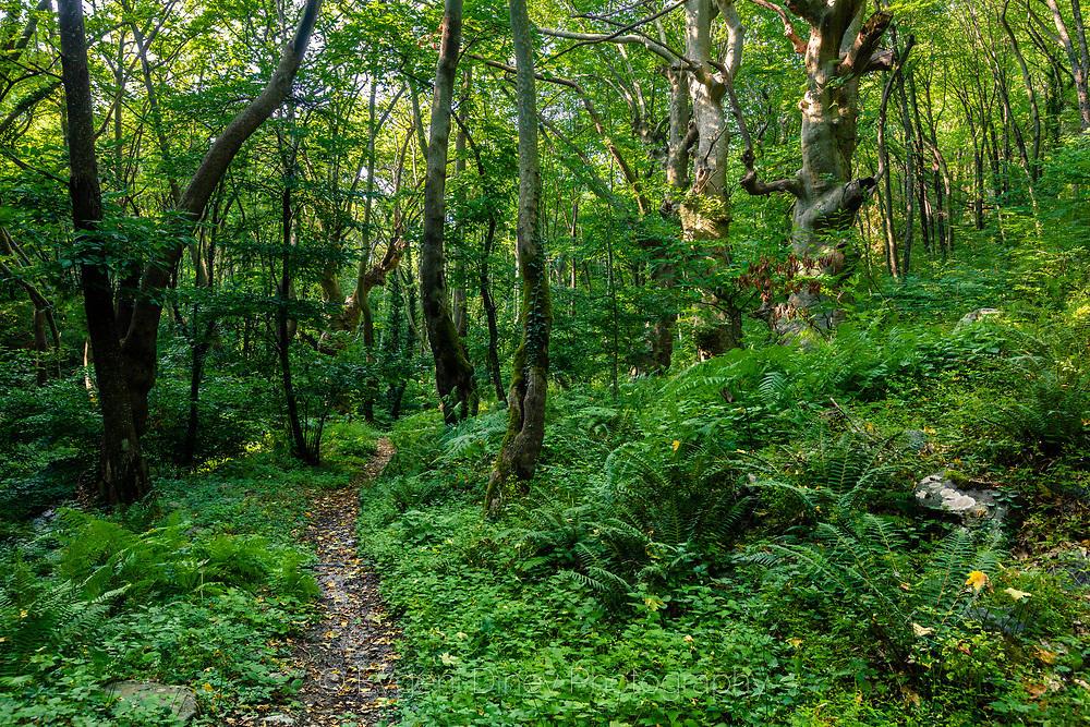 Кестенова гора