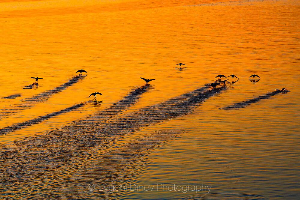 Отлитащи птици от морето по залез