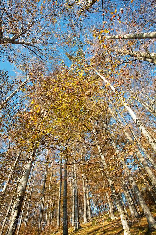 Есен в резерват Боатин