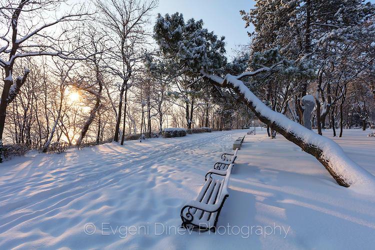 Криво дърво, надвиснало над пейки