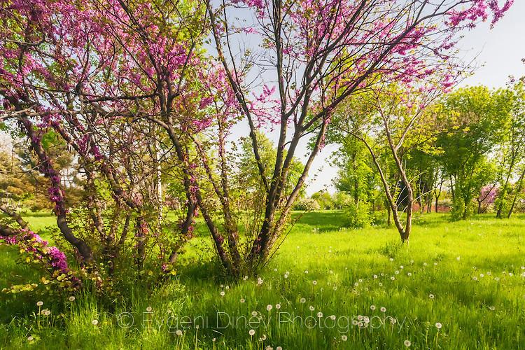 Пролетно дръвче