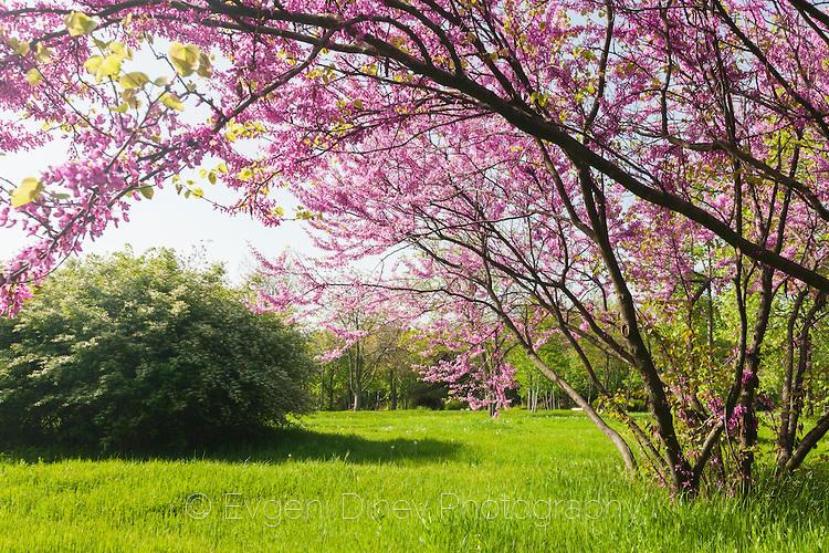 Пролетен взрив от цветове
