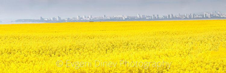 Панорама на Бургас с рапично поле