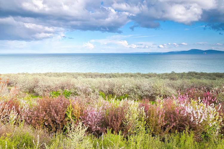Цветни храсти в местността Кьошето