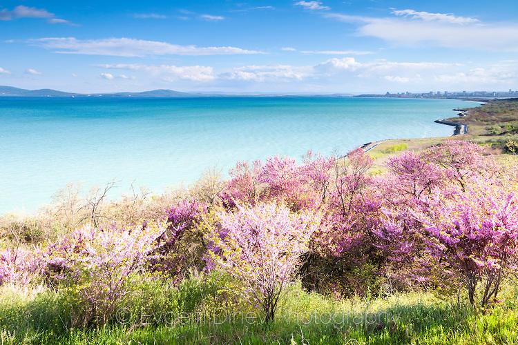 Цветно крайбрежие