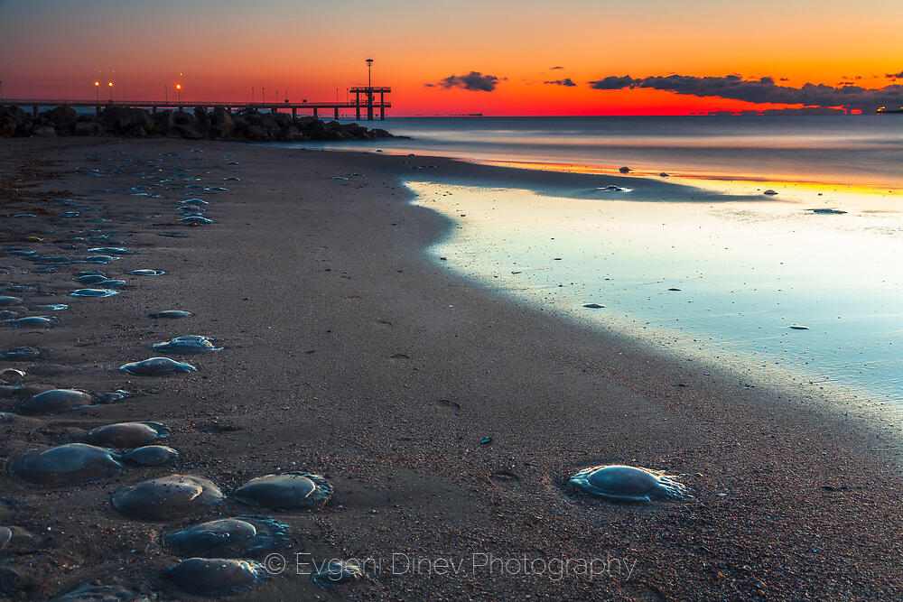 Мъртви медузи на Бургаския бряг