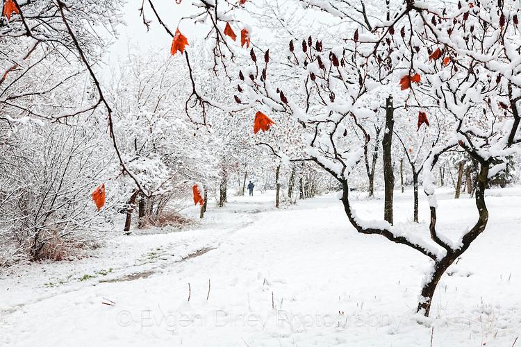 Зимно дърво с оранжеви листа