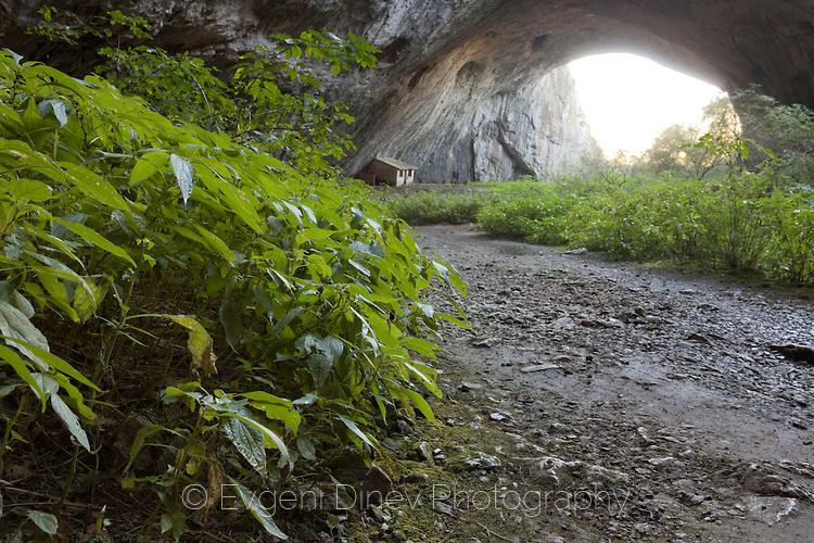 Зеленина в Деветашка пещера