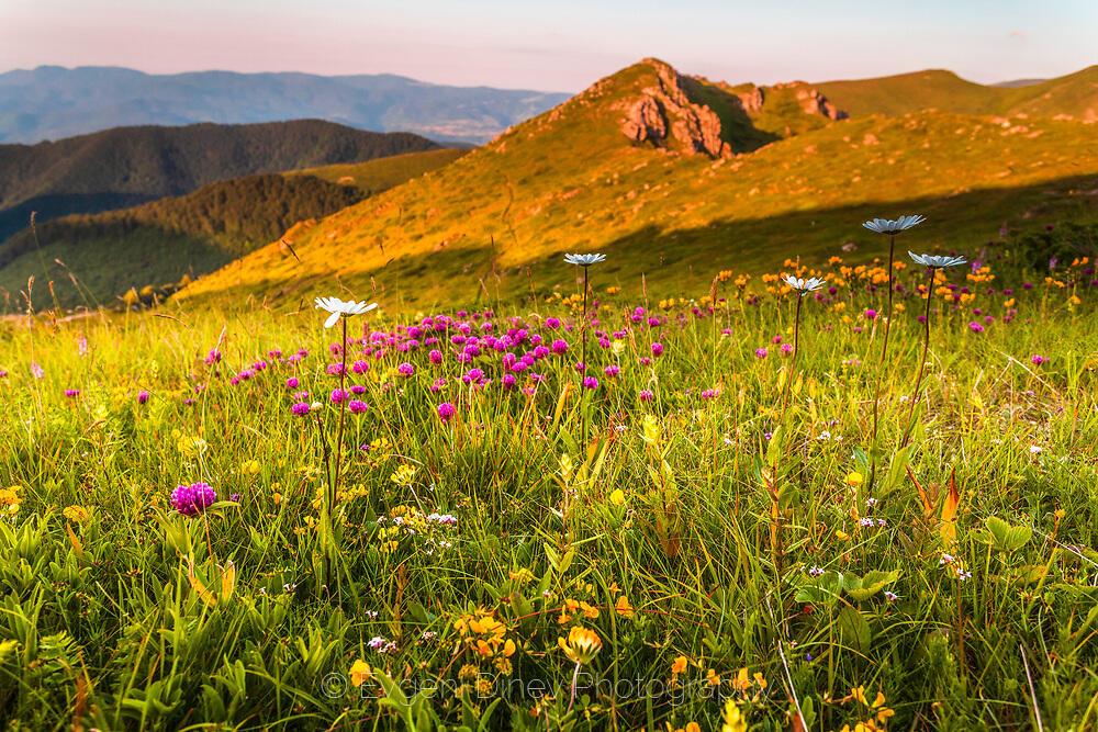 Стара Планина в тучна зеленина