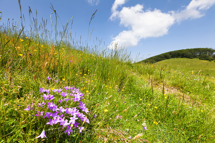Лилави пролетни цветчета