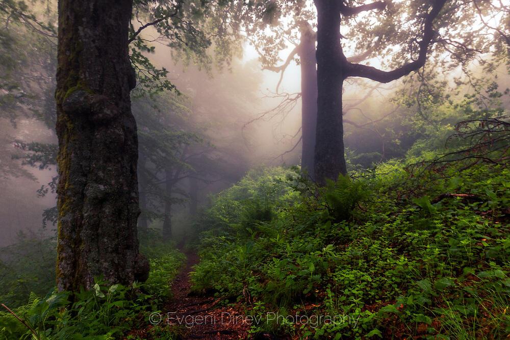 Пътека през мъглива гора