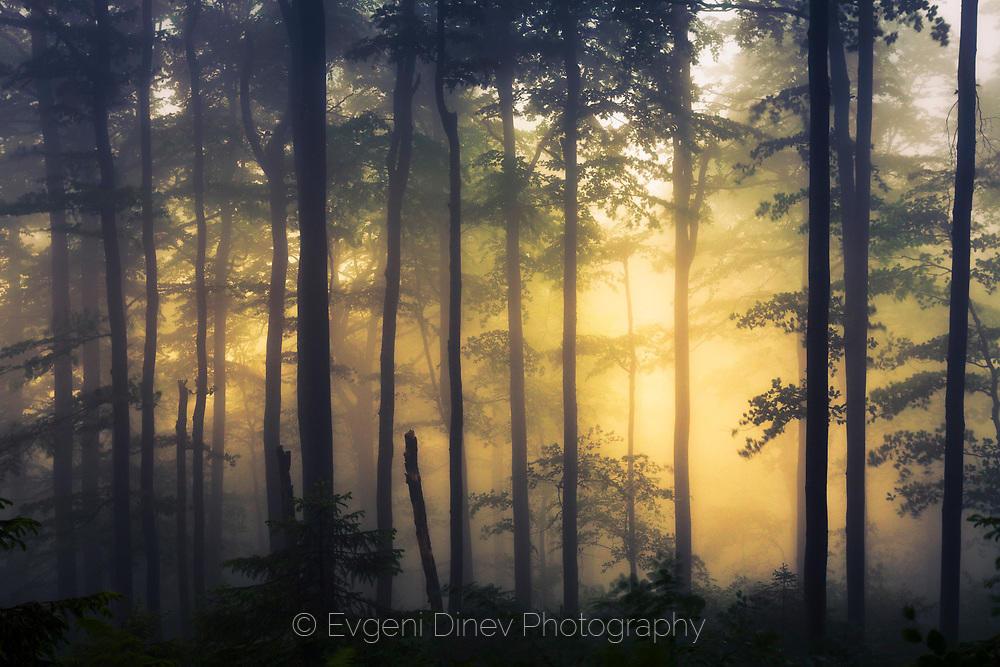 Мрачен лес