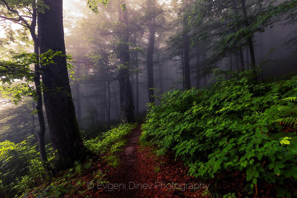 Забулена в тъмна мъгла гора