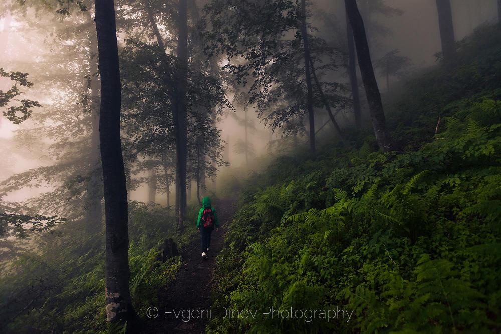 В зелената гора
