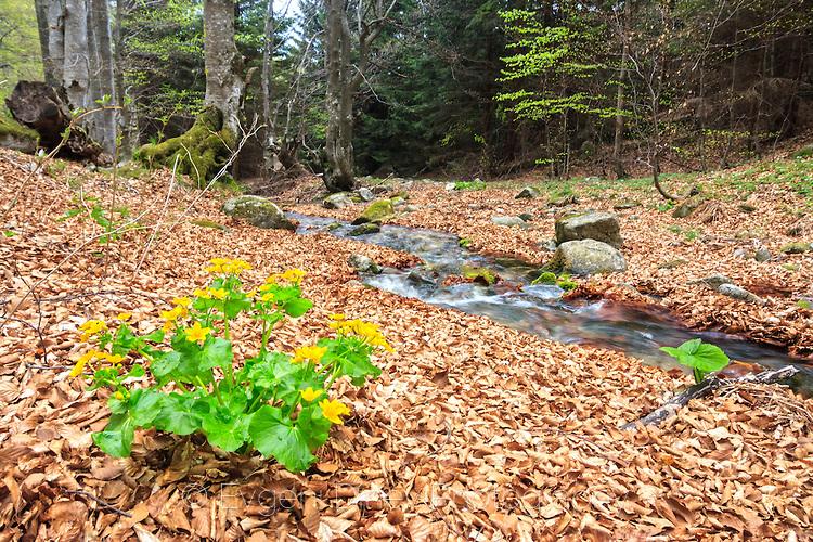 Цвете до реката