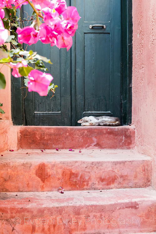 Розов двор с цветя и котка в Ханя