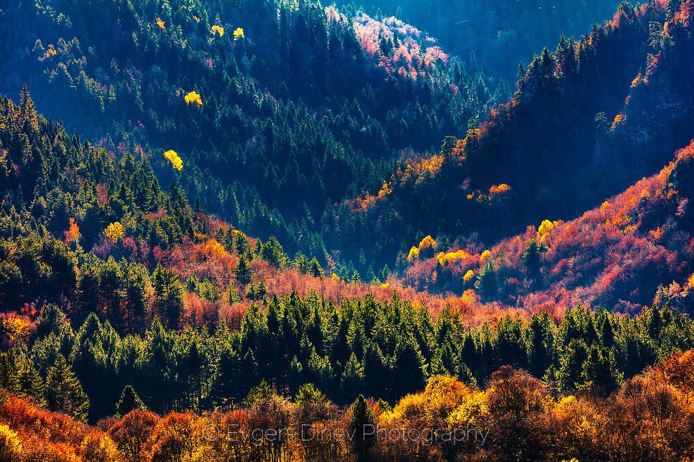Цветни Девински гори