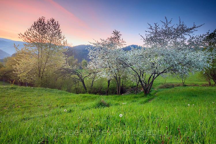 Красив пролетен пейзаж край Девин