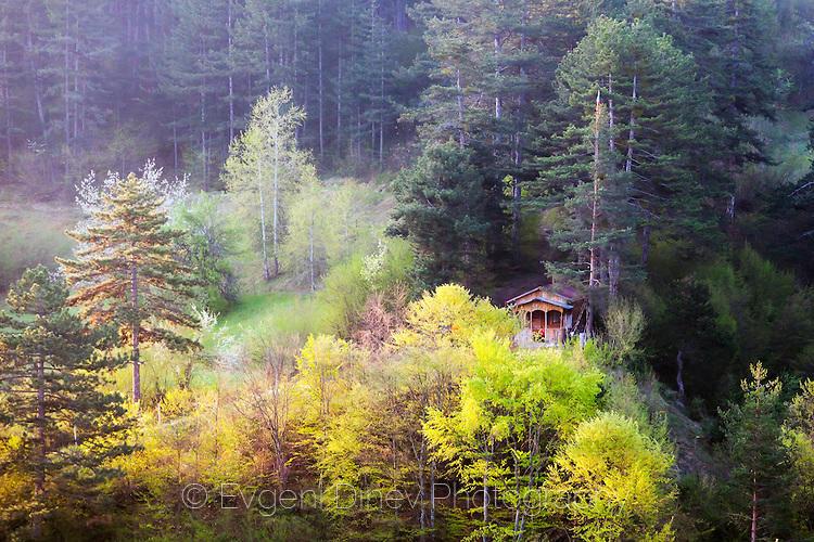 Пролетни гори