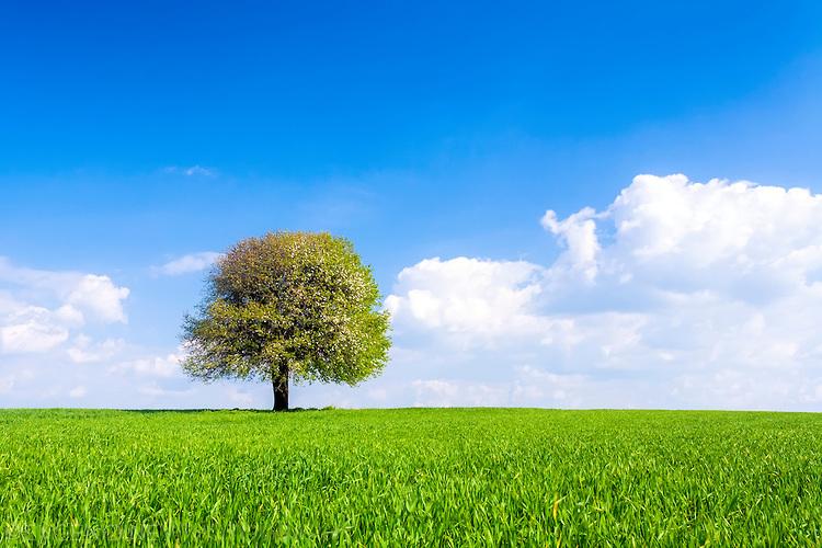 Дърво насред зелено поле
