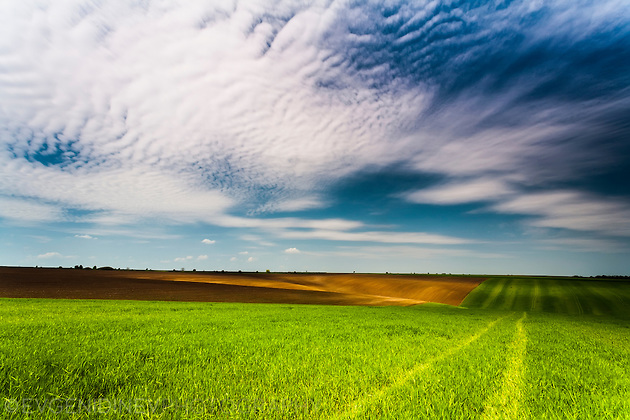 Добруджанско поле