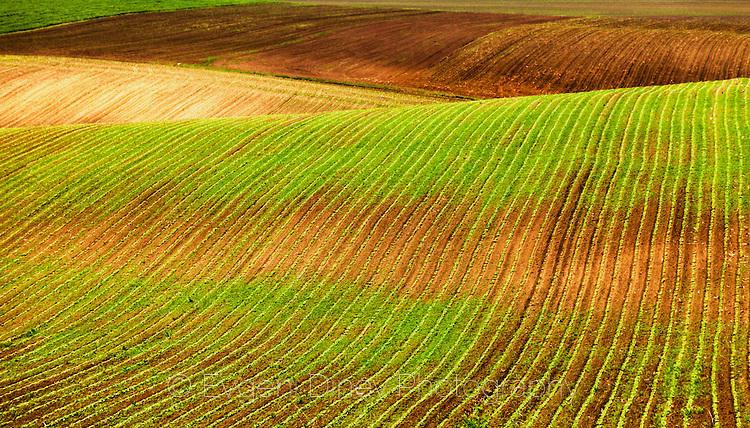 Зелено-кафяво поле