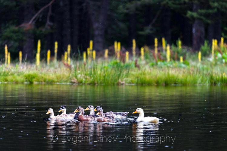 Патенца на езеро Семково