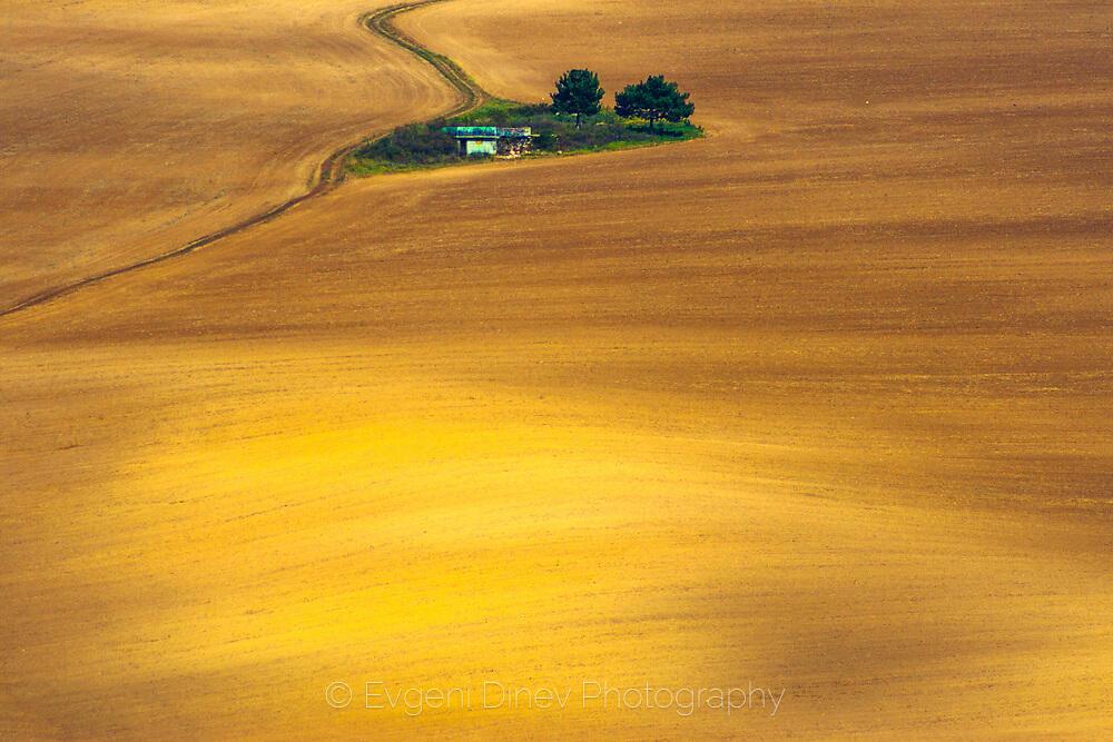 Остров в златно поле