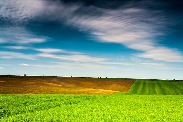 Пролетни поля