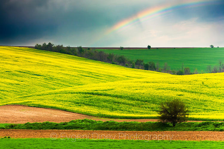 Дъга над полята