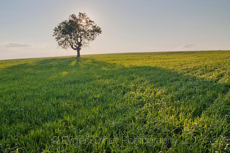 Слънце зад дървото