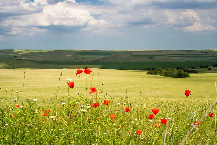 Българско пролетно поле