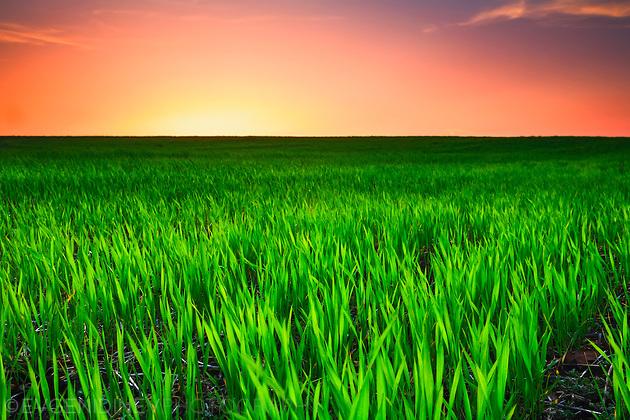 Зелено поле по залез