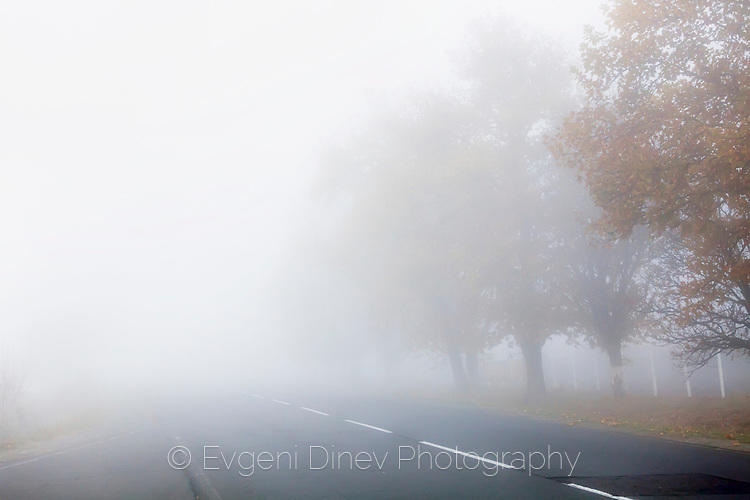 Път в гъста мъгла