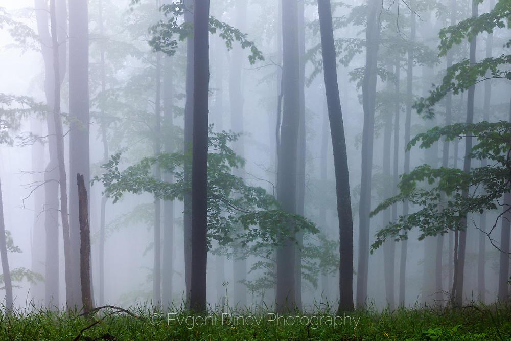 Царството на мъглата