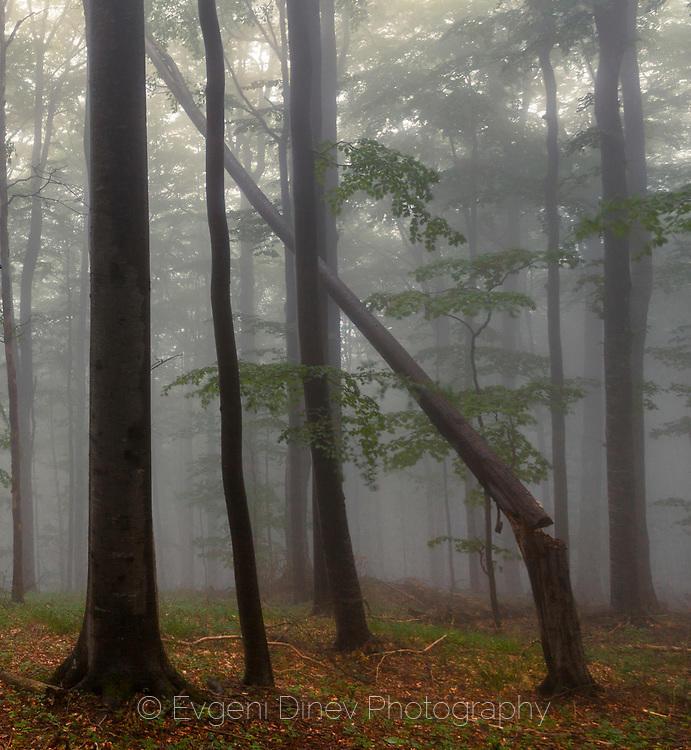 В царството на старата букова гора