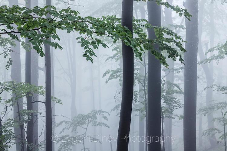 Крехка пролетна гора