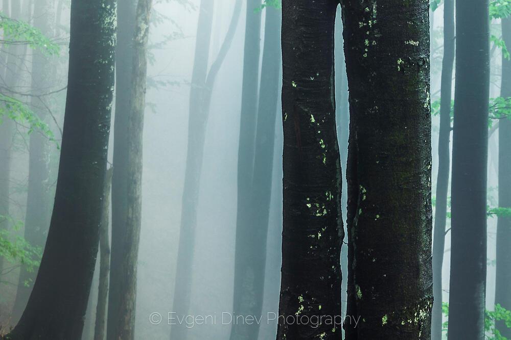 Спотаени в мъглата