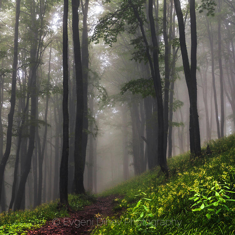 Еко пътека в мъглата
