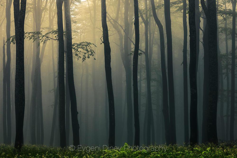 Изгубената гора
