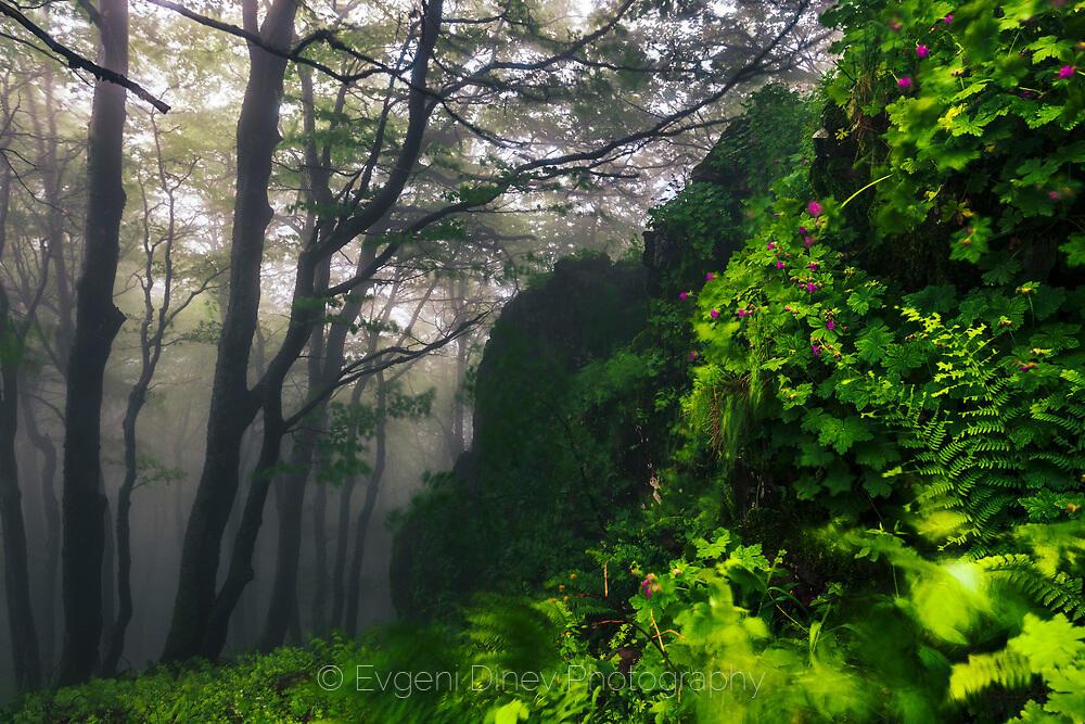 Пролетен горски пейзаж