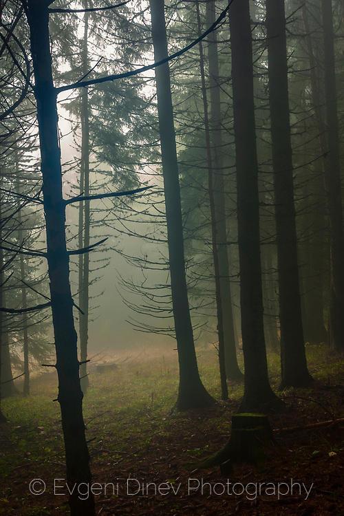 Тъмния лес