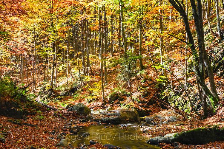 Слънчева гора