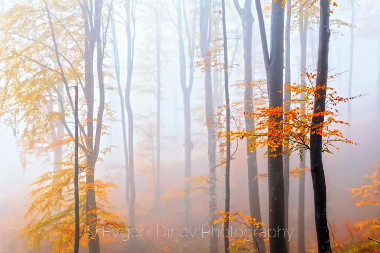 Есенни букаци
