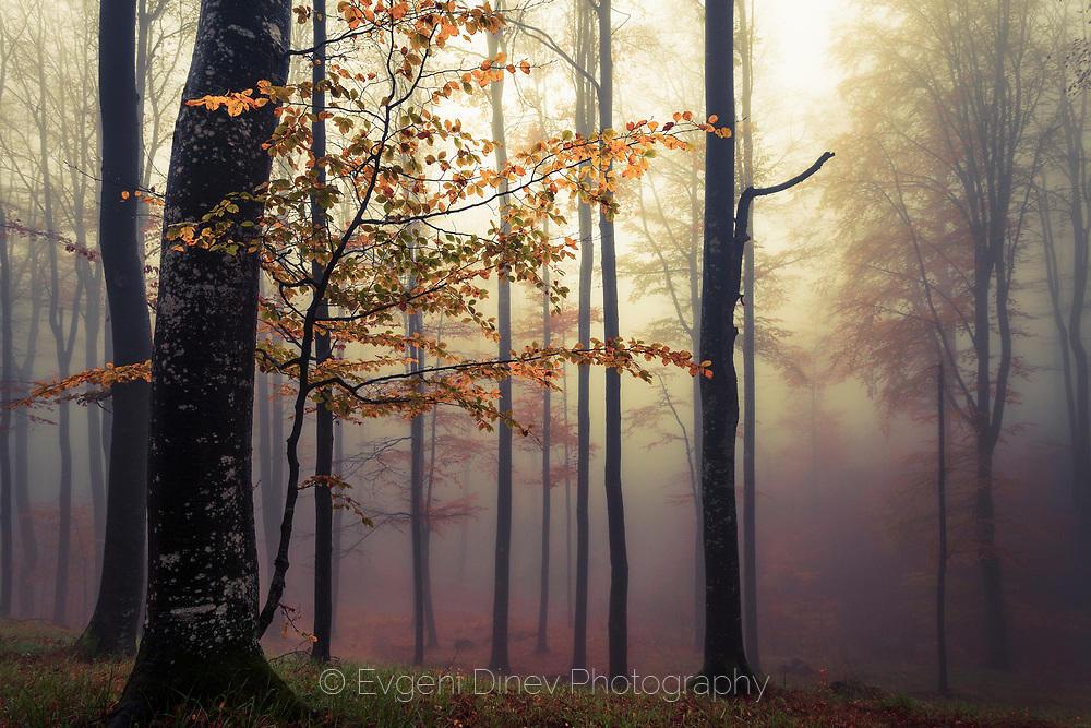 Цветна есенна гора